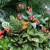 Комнатные цветы для вашего здоровья