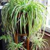 Какие домашние растения лучше выбрать для дома