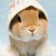 Как ухаживать за кроликом?