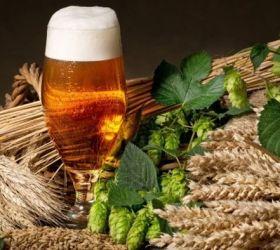 Пиво лагер: богатый ассортимент на любой вкус